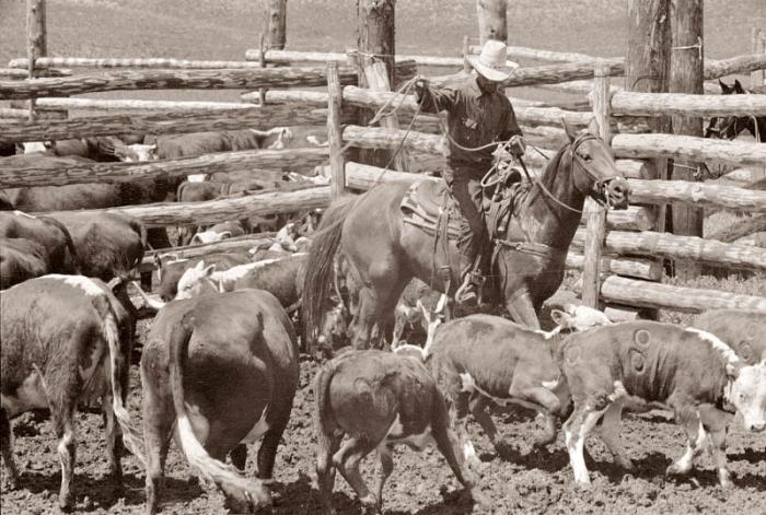 Ковбой за работой, Монтана, 1939