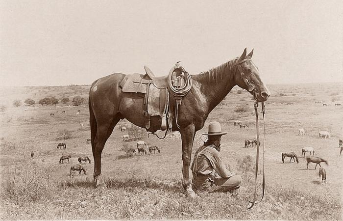 Ковбой за работой, 1910