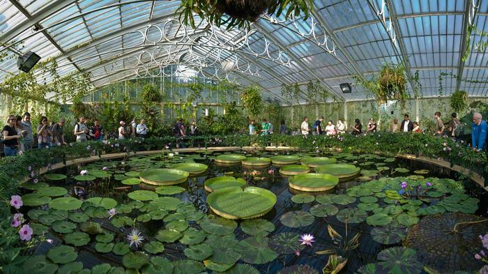 Кью Гарденс начали свою историю с 1670 года на месте аптекарского огорода. А сегодня там расположены три огромных оранжереи, во время посещения которых можно  насладиться цветением камелий и орхидей.
