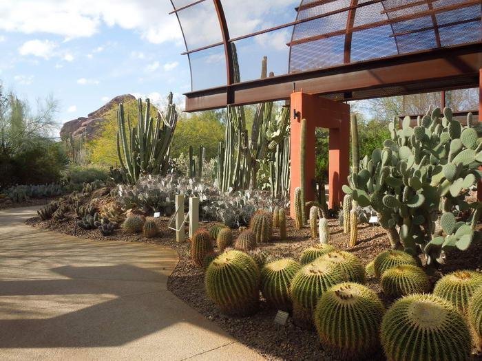 В этом уникальном ботаническом саду собрана самая большая коллекцию кактусов в мире.