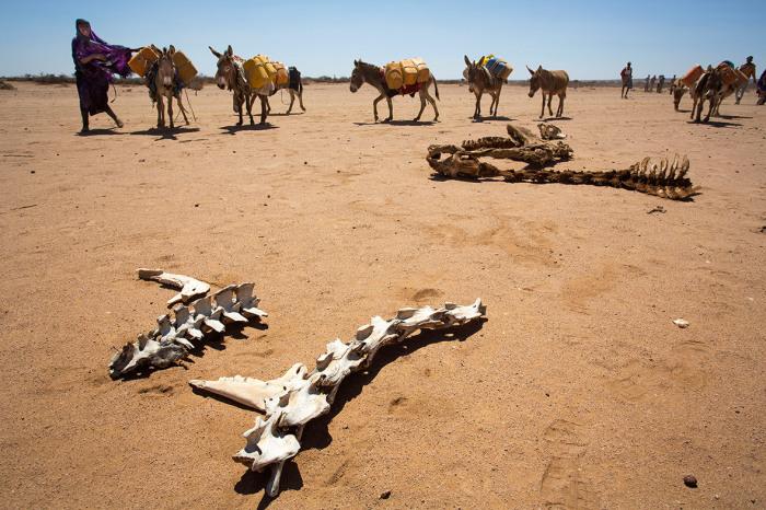 Страшные последствия засухи близ города Харгейсы.