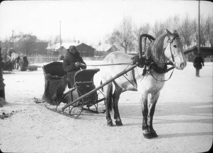 Запряженная лошадь. СССР, Урал, 1929 год.