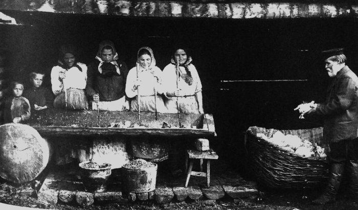 Заготовка капусты на зиму. Южный Урал, 1914