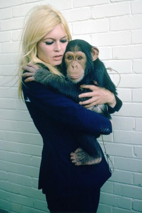 Брижит Бардо и шимпанзе.