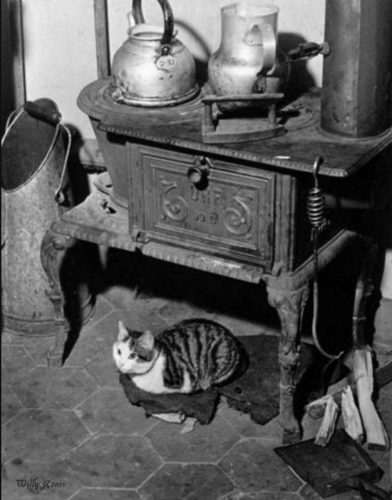 Кошка у плиты. Франция, Париж, 1947 год.