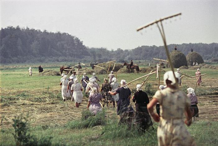 Сенокос в Подмосковной деревне. СССР, 1957 год.