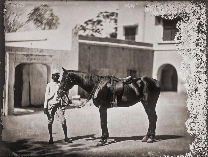 Одна из лошадей, принадлежащих махарадже. Джайпур, примерно 1857 год.