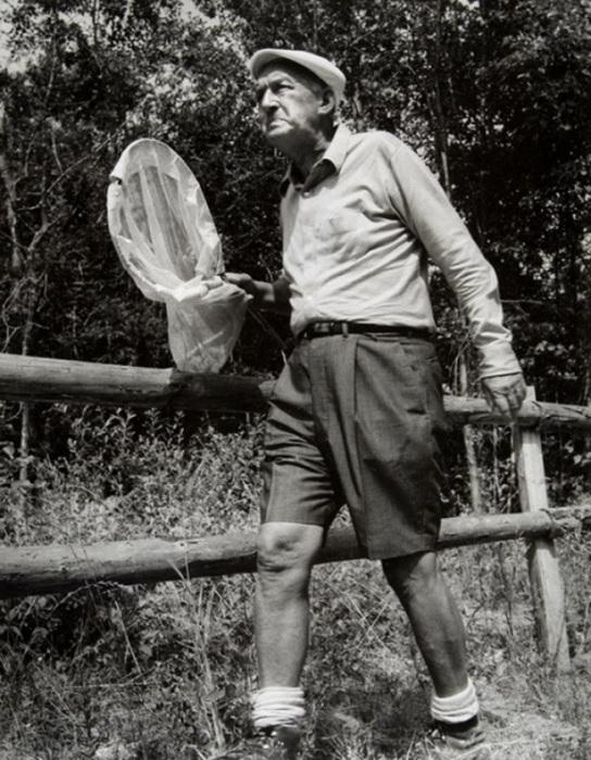 Владимир Набоков охотится на бабочек. Швейцария, 1972 год.