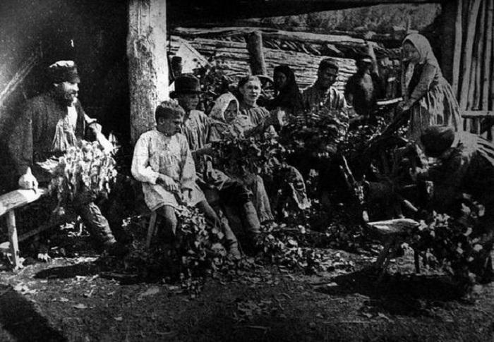 Заготовка банных веников. Село Ужур, Ачинский уезд.