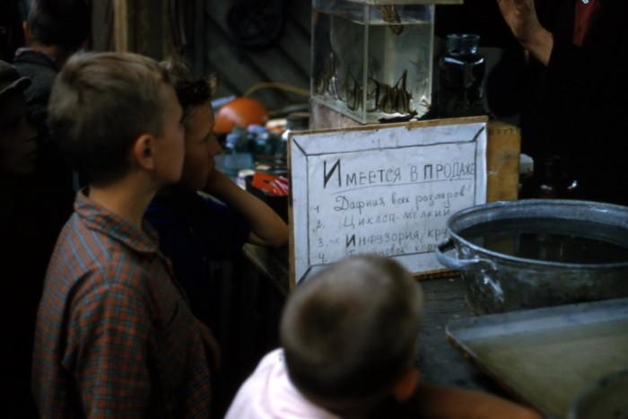 Продажа аквариумных рыбок на рынке.