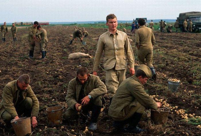 Привлечение к сельскохозяйственным работам военнослужащих. СССР, 1980-е годы.