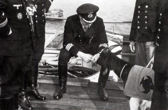 Леманн–Вилленброк кормит козла в попоне с эмблемой 9–й флотилии. Франция, Брест, 1944 год.