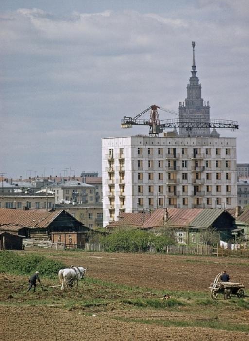 Крестьяне села Семёновское упорно трудятся на окраине Москвы. СССР, 1965 год.