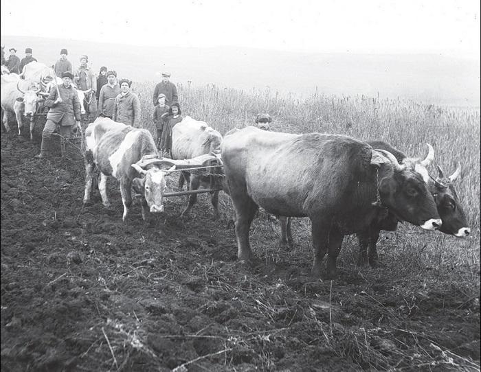 Колхозные работы в поле.  Донецкая область, 1930 год.