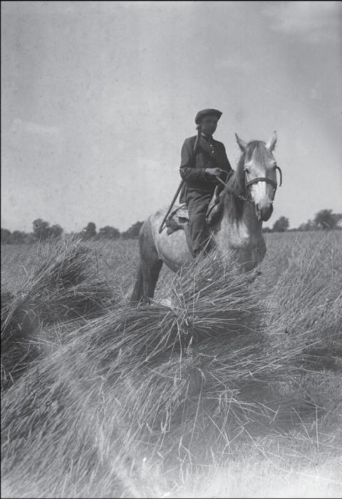 Женщина-сторож на лошади. СССР, Украина, Полтавская область, 1932 год.