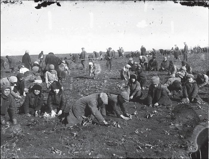Посев картошки в колхозе. Донецкая область, 1933 год.