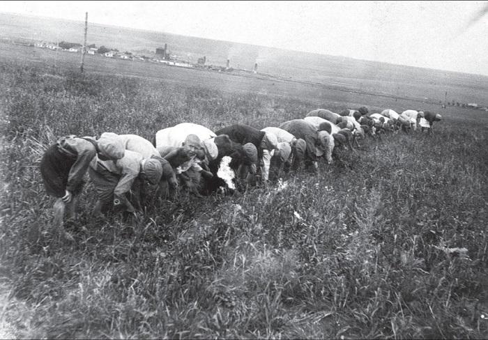 Сбор пшеницы. Донецкая область, 1934 год.