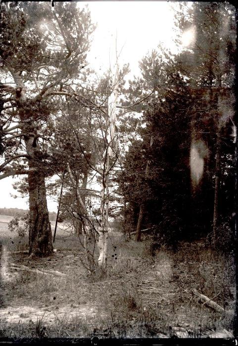 Пейзаж вблизи села Ларьяк. Река Вах, 1912 год.