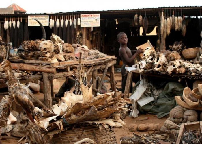 Рынок магических предметов и колдовских трав Акодессева. Африка, Того, город Ломе.