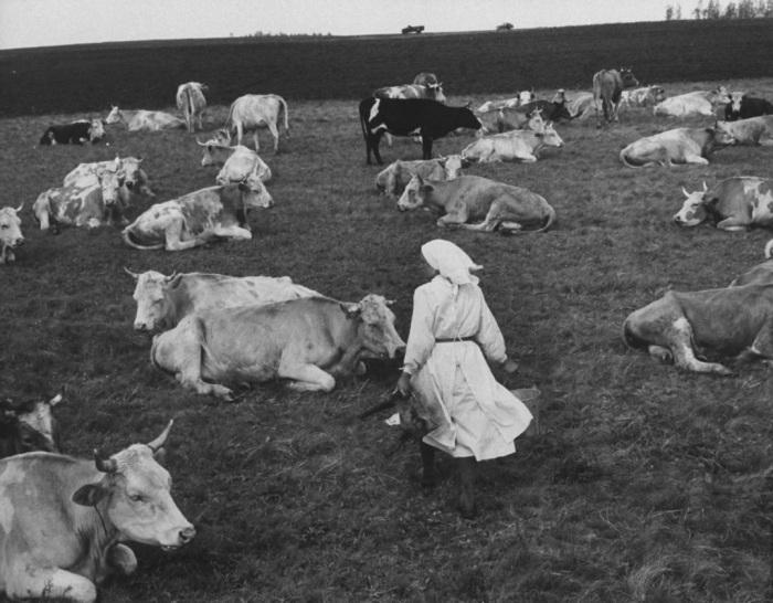 Картинки пастух для детей