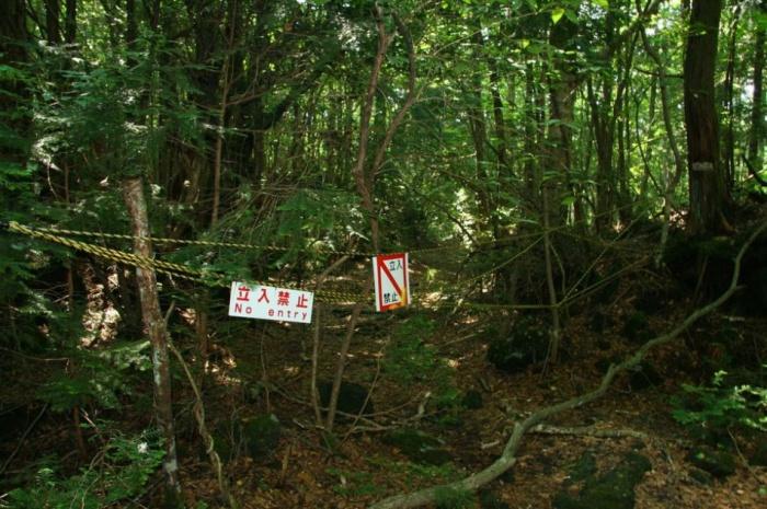 Лес Аокигахара Дзюкай в котором и по сей день совершаются ритуальные самоубийства. Япония, остров Хонсю.