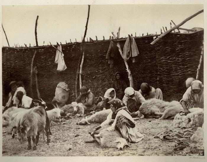 Стрижка овец. Цимлянская станица. 1875-1876 год.
