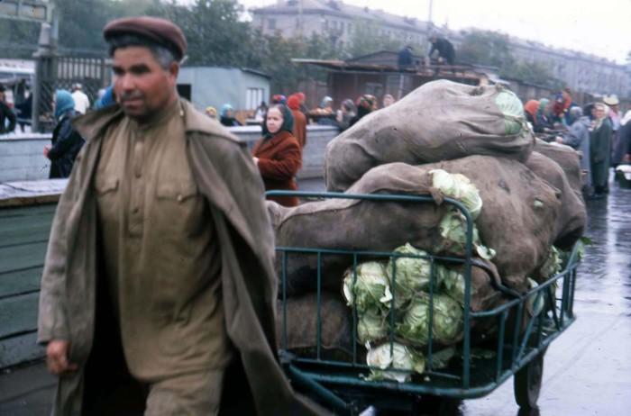 Мужчина, везущий на телеги привезенную капусту. СССР, Новосибирск, 1969 год.