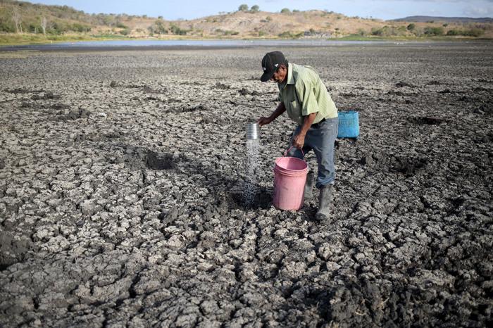 Фермер поливает растение во время засухи.