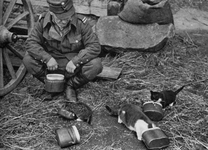 Солдат вермахта кормит котят. СССР, Западная Украина, 1942 год.