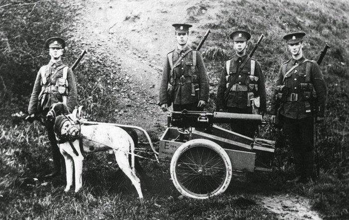 Пулемётный расчёт англичан с пулемётом «Виккерс» на собачьей упряжке. Западный фронт, август 1914 года.