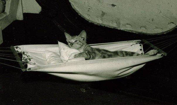Корабельный кот-талисман авианосца.