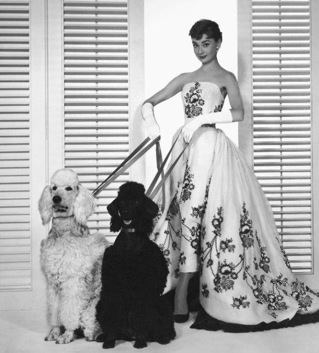 Одри Хепберн ещё с детства любила животных.
