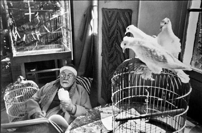 Анри Матисс, пишуший голубей с натуры.