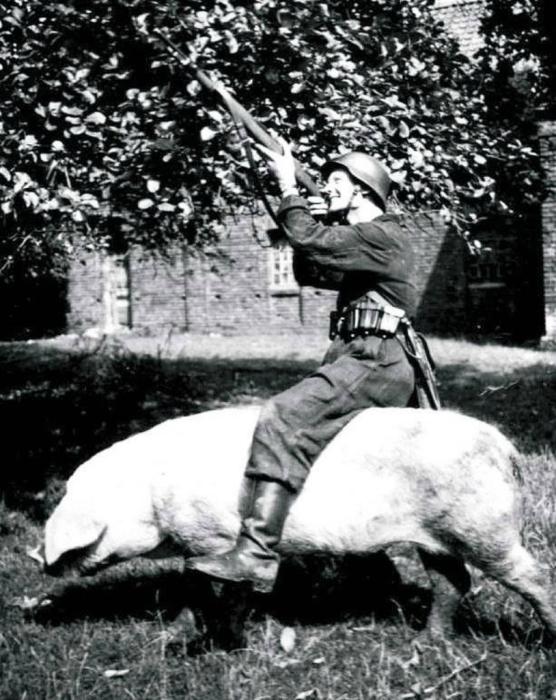 Немецкий солдат упражняется в стрельбе, сидя на свинье. СССР, Западная Украина, 1941 год.