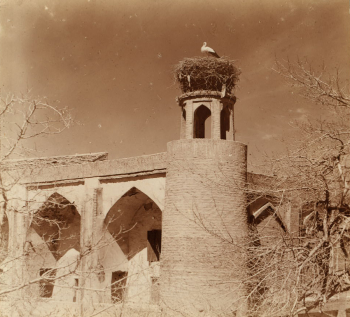 Аист в гнезде. Фотография Сергея Михайловича Прокудина-Горского. Бухара, 1905 год.