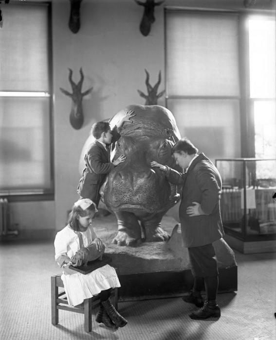 Слепые дети изучают гиппопотама в Американском Естественно–историческом музее в 1914 году.