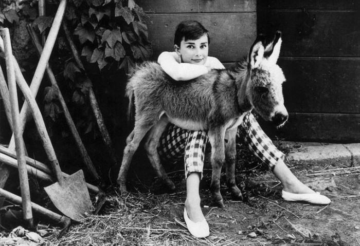 Фотография Одри Хепберн c домашним ослом.