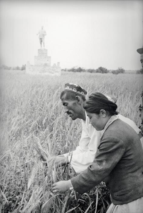 Мужчина и женщина проверяющие качество пшеницы. Фото: Max Penson.