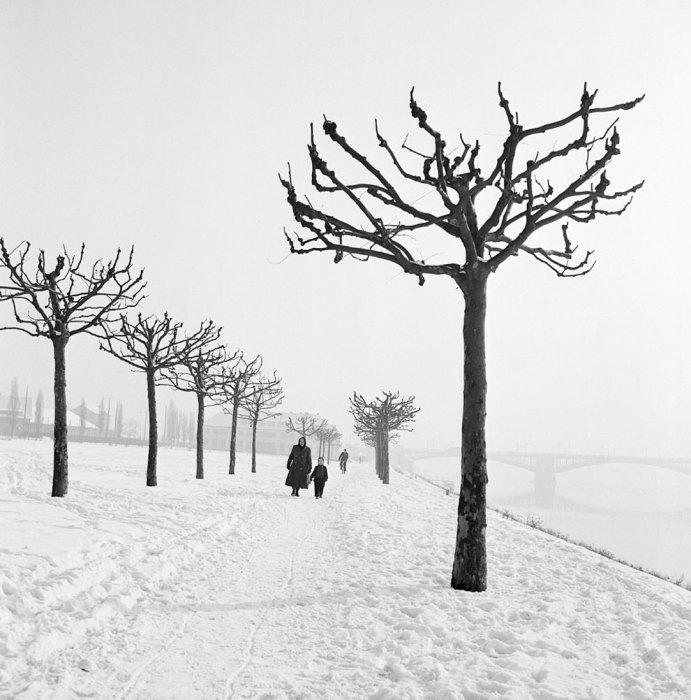 Зимняя прогулка вдоль правого притока Рейна. Германия, 1955 год.