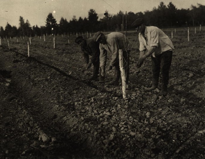 Уход за посаженной картошкой и огурцами. СССР, 1930 год.