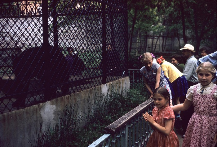 Дети, смотрящие на медведя в зоопарке. СССР, Харьков, 1959 год.