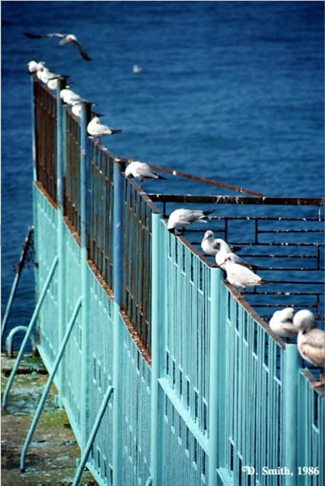Чайки, сидящие на заборе в Ялтинском порту. Крым, Ялта, 1988 год.