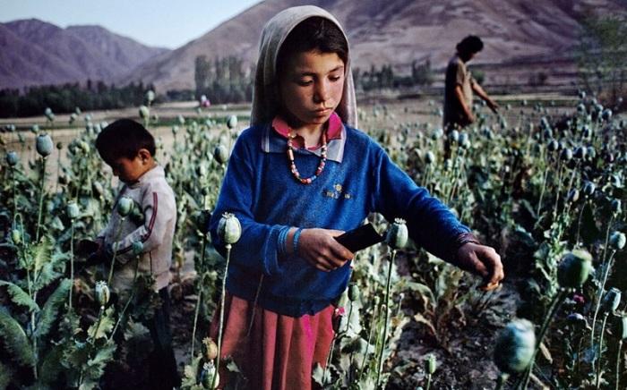 Сбор урожая мака на поле в Бадахшане. Афганистан, 1992 год.