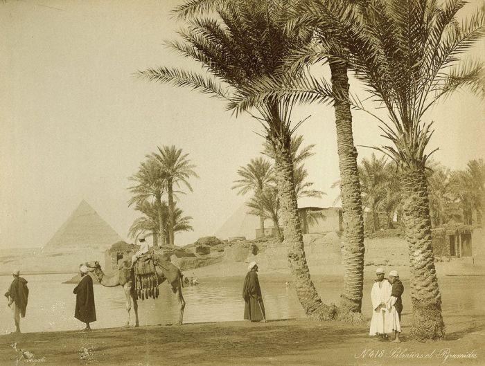 Пальмовая роща возле пирамид.