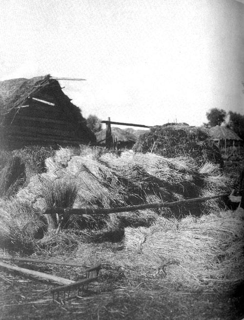 Место для хранения урожая. Рязанская губерния, Касимовский уезд. 1914 год.