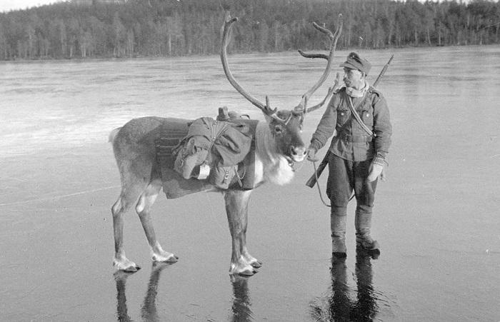 Участие Финляндии во Второй мировой войне.
