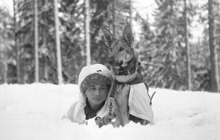 Обучение военных собак в Хямеенлинне.