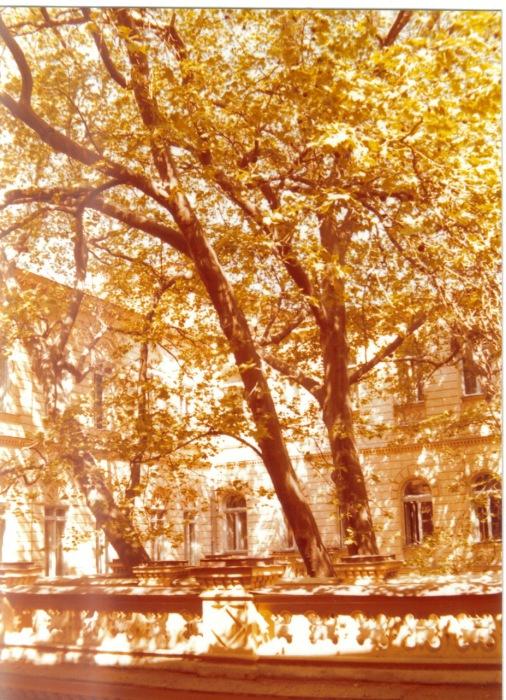 Во дворе гостиницы неподалеку от Дерибасовской улицы. СССР, Одесса, 1976 год.
