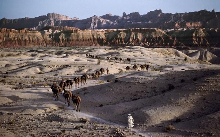 Караван верблюдов. Афганистан, 1981 год.