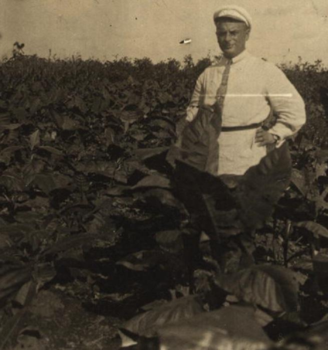 Мужчина в поле, где выращивают маньчжурский табак. СССР, 1920-е годы.